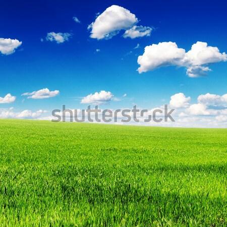 Voorjaar weide blauwe hemel zon natuur zomer Stockfoto © serg64