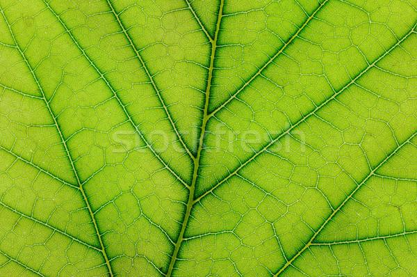 Vers blad plant voorjaar voedsel Stockfoto © serg64