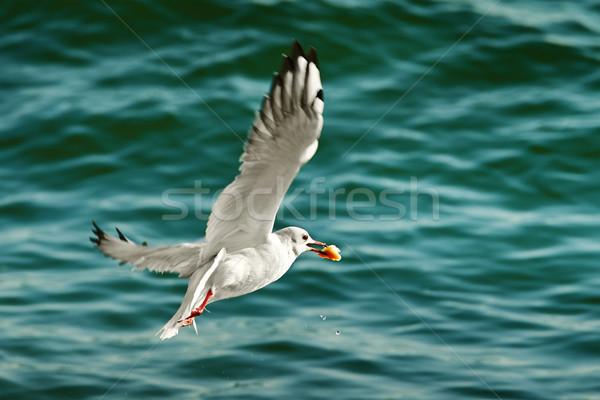 seagull with food in beak Stock photo © serg64