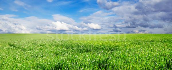 meadow Stock photo © Serg64