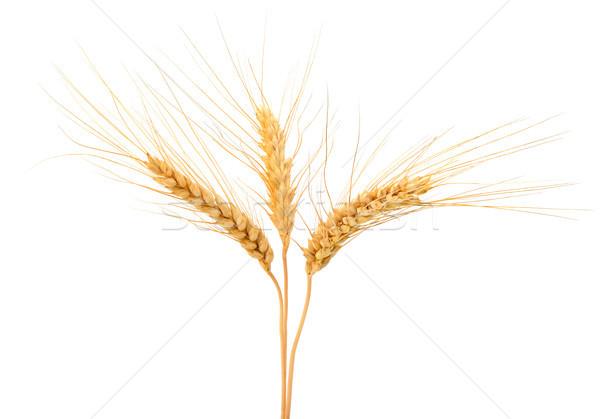 ストックフォト: 小麦 · 耳 · 孤立した · 白 · 食品 · グループ