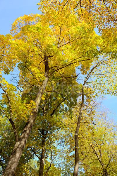 небе лист фон красоту Сток-фото © serg64