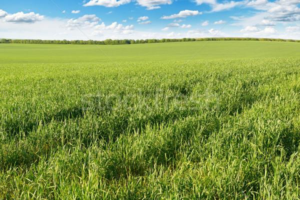 çayır mavi gökyüzü bahar güneş arka plan yeşil Stok fotoğraf © serg64