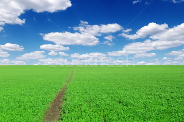 путь области облака весны трава солнце Сток-фото © Serg64