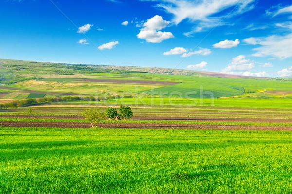 beautiful rural landscape Stock photo © serg64