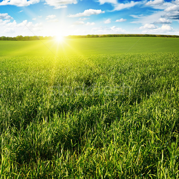 Belo pôr do sol verde campo céu nuvens Foto stock © serg64