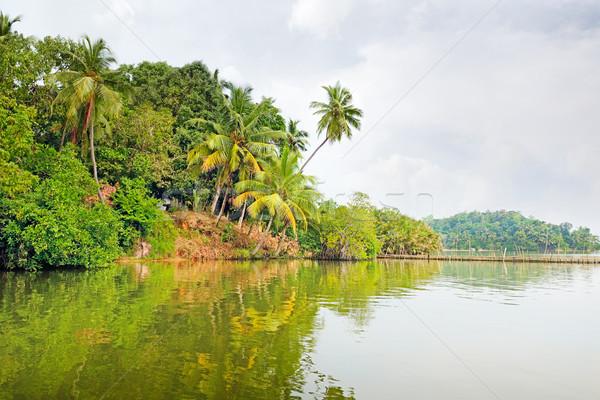 Tropical jungle on the lake Stock photo © serg64
