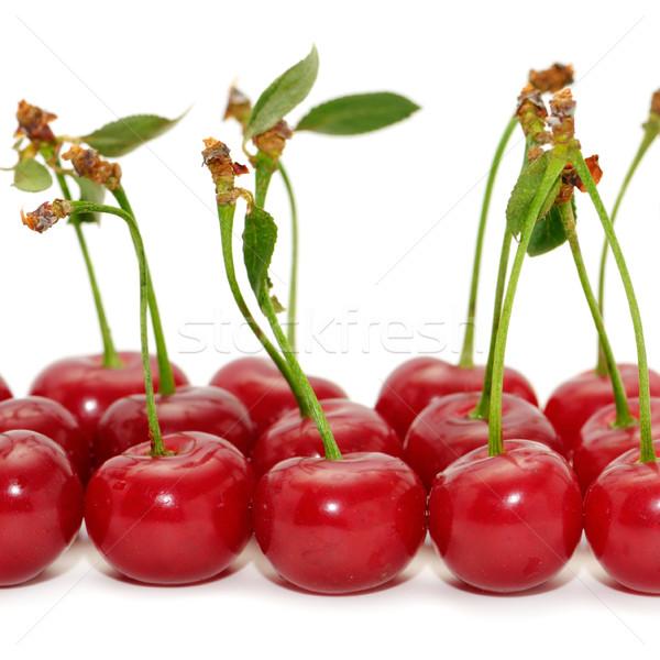 cherries  Stock photo © Serg64