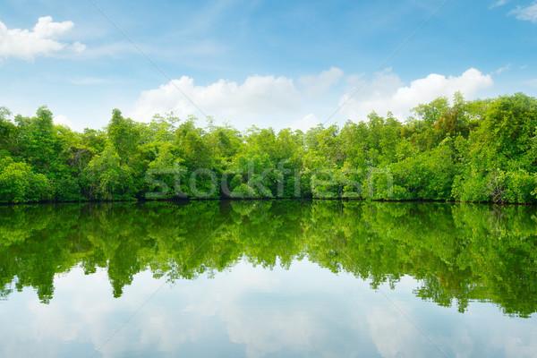 Blue Sky облака лес пейзаж морем лист Сток-фото © serg64
