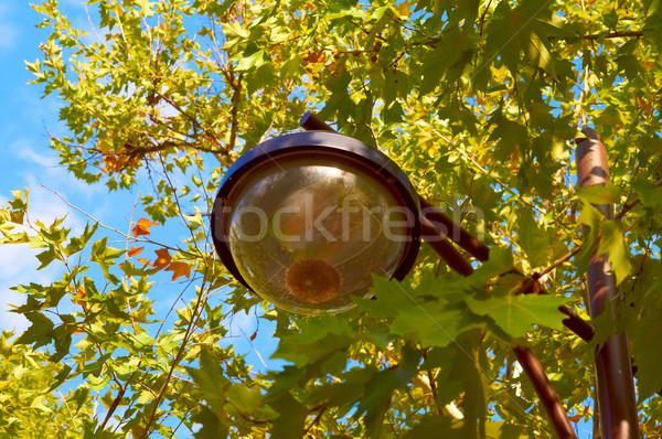 Park lantern surrounded with green and yellow leaves Stock photo © serge001