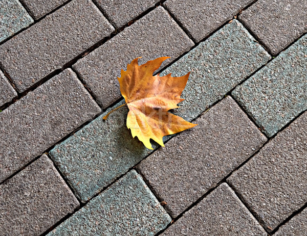 Lonely yellow maple leaf on paving Stock photo © serge001