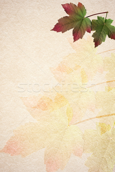 Old paper autumn leaves background Stock photo © serge001