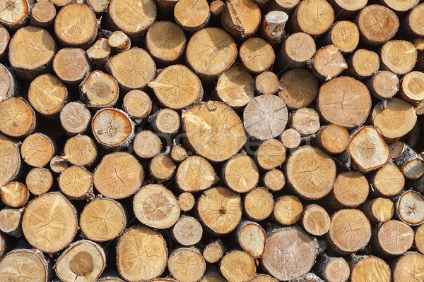 Stacked wood pine timber Stock photo © serpla
