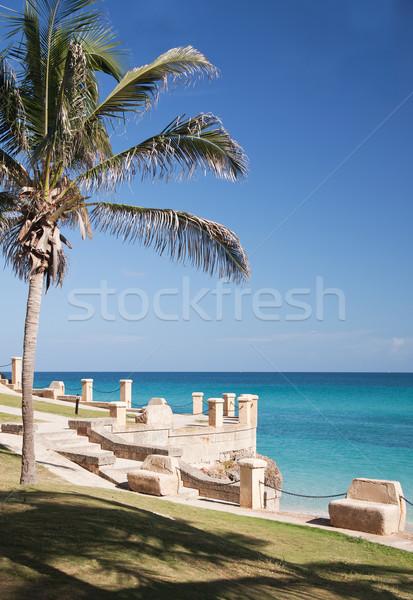 Palm on atlantic ocean beach Stock photo © serpla