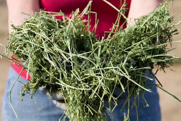 западной люцерна фермер продовольствие зеленый сельского хозяйства Сток-фото © sframe