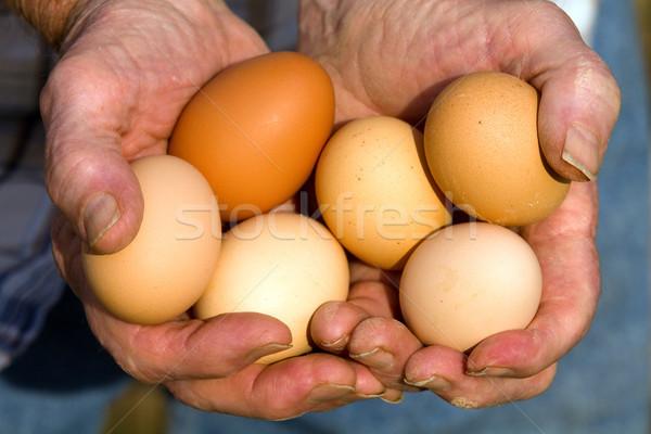 органический яйца фермер свежие свободный Сток-фото © sframe