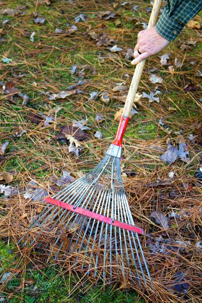 осень листьев человека вверх соснового хвоя Сток-фото © sframe