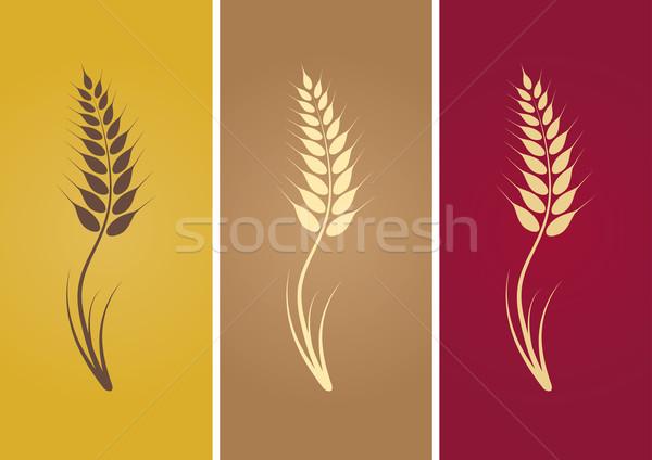 wheat Stock photo © sgursozlu
