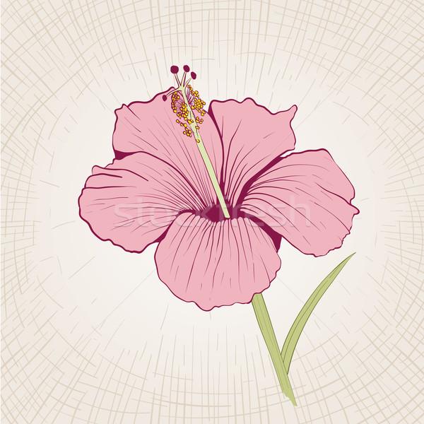 Ebegümeci vektör çiçek global renk Stok fotoğraf © sgursozlu