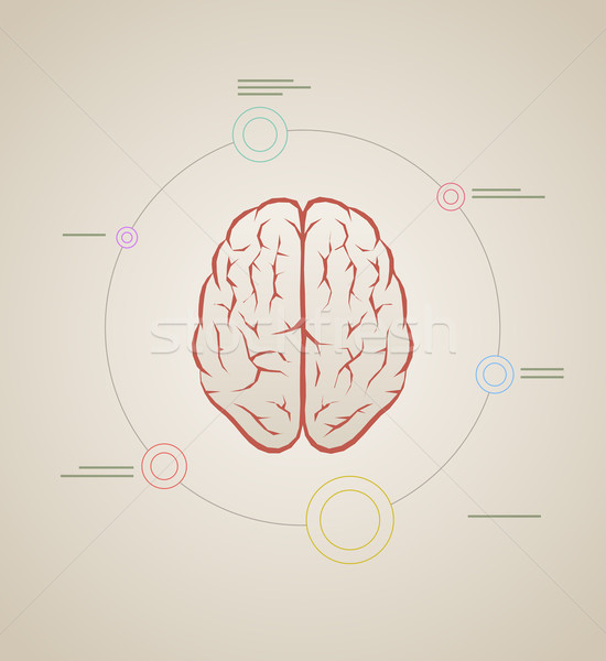 brain infographic template Stock photo © sgursozlu