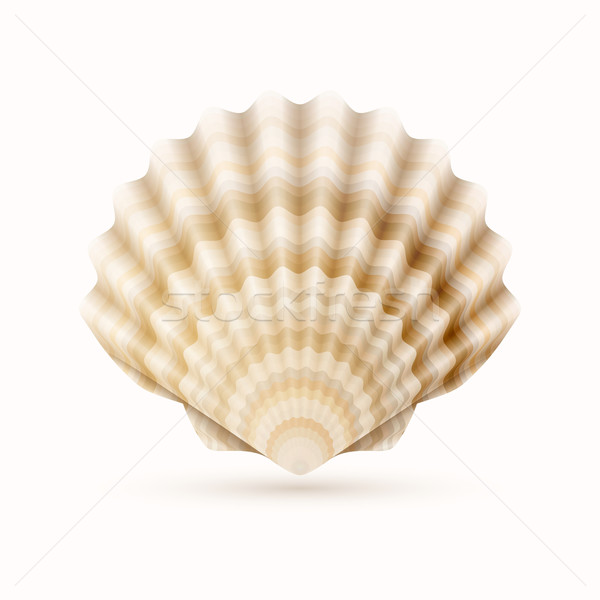 Zee shell gedetailleerd voedsel achtergrond witte Stockfoto © sgursozlu