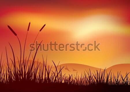 Marshland sunset. Stock photo © sgursozlu