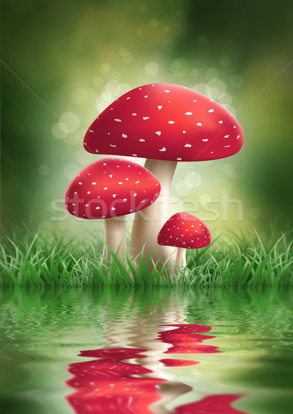 Fly Agaric Mushrooms. Stock photo © sgursozlu