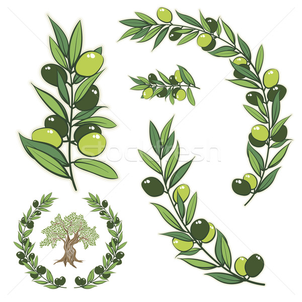 Vector wreath with olive branch and olive tree. Stock photo © sgursozlu