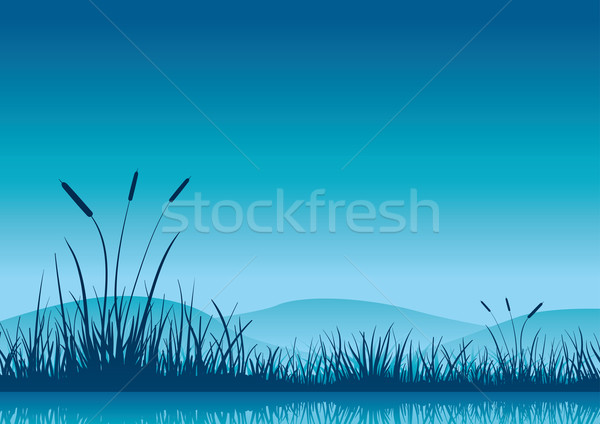 Marshland early morning. Stock photo © sgursozlu