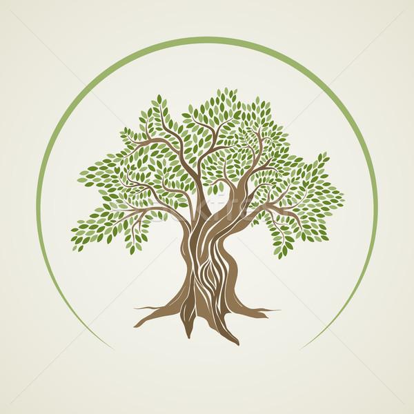 Olajfa terv levél háttér zöld sziluett Stock fotó © sgursozlu
