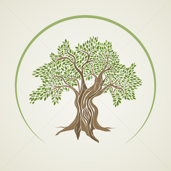 Olijfboom ontwerp blad achtergrond groene silhouet Stockfoto © sgursozlu