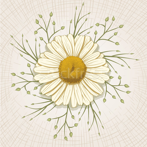 рисованной Daisy вектора глобальный цвета цветок Сток-фото © sgursozlu