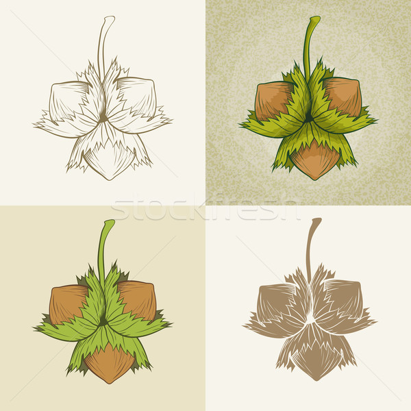 Foto stock: Avelã · vetor · ilustração · conjunto · natureza