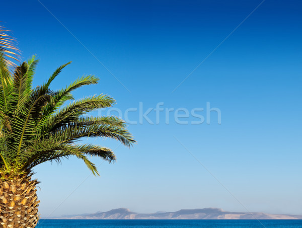 Palm tree and blue sky. Stock photo © sgursozlu