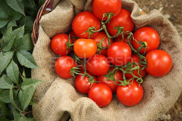 Organic tomatoes on a natural background Stock photo © shamtor