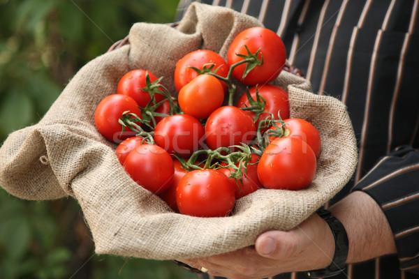 Farmer showing organic tomatoes Stock photo © shamtor