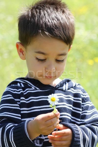 Portrait of a male child with a daisy Stock photo © shamtor