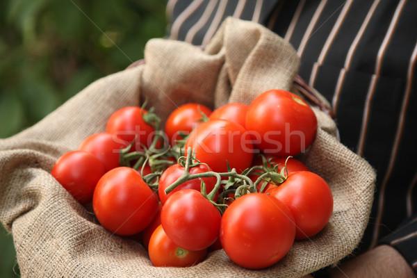 фермер корзины органический помидоров природного продовольствие Сток-фото © shamtor