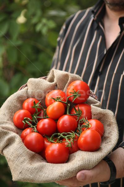 çiftçi organik domates gıda adam meyve Stok fotoğraf © shamtor