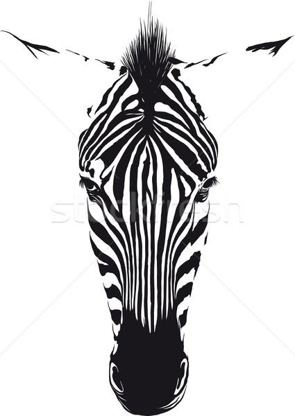 Zebra Head Stock photo © sharpner