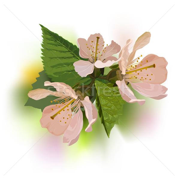Tak abrikoos bladeren retro-stijl bloemen Stockfoto © sharpner