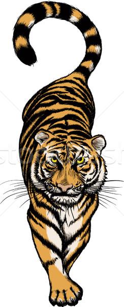 illustration of Crouching Tiger Stock photo © sharpner