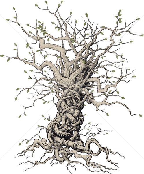 interlaced tree Stock photo © sharpner