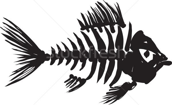 fish skeleton Stock photo © sharpner