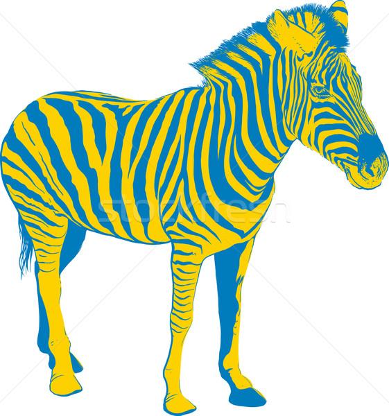 Amarelo azul zebra perfil branco moda Foto stock © sharpner