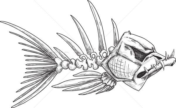 sketch of evil skeleton fish with sharp teeth Stock photo © sharpner