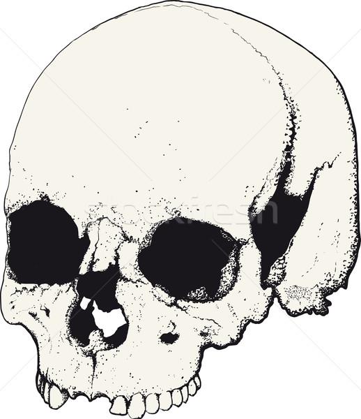 skull in profile Stock photo © sharpner