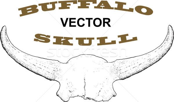Old Buffalo Skull Stock photo © sharpner