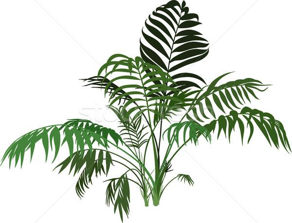 Palmboom exotisch palm bush geïsoleerd Stockfoto © sharpner