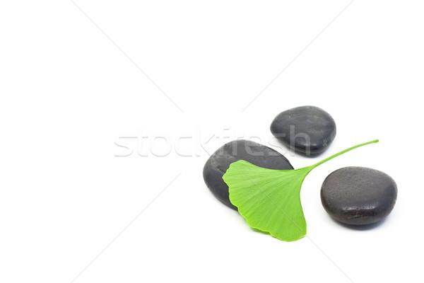 Ginkgo leaf Stock photo © ShawnHempel